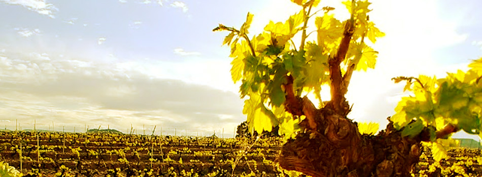 Estrés Hídrico y estrés Térmico en el viñedo riojano