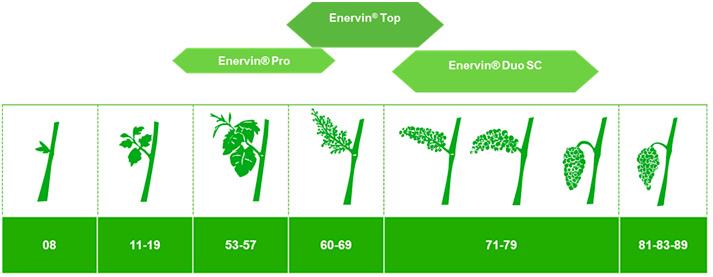 Programa de tratamientos de Enervin en viñedo