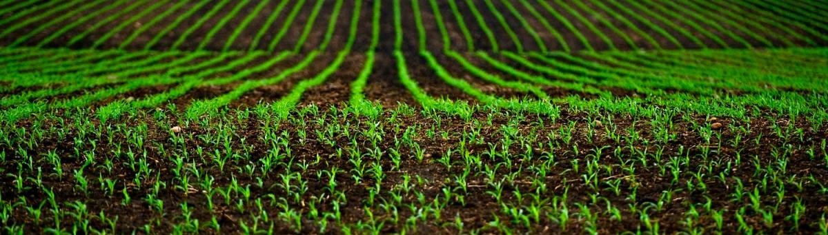 Fertilizantes Liberación controlada Cultivo