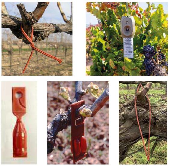 difusores de feromonas en viñedo