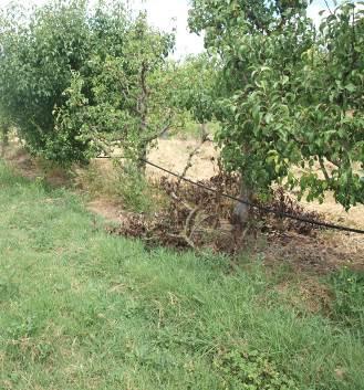 Restos de ramas en la línea y montones de ramas sin quemar.