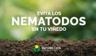 Desinfección del viñedo para evitar nematodos