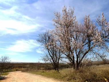 La floración de los almendros en La Rioja