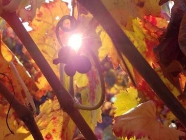 Colores de las hojas