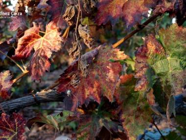 O2 - Plena caída de hojas