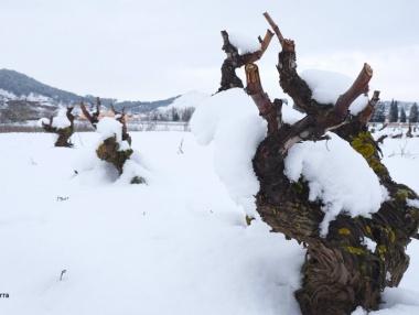 Beneficios de la nieve en el viñedo riojano