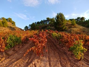 Panorámica viñedo en La Rioja