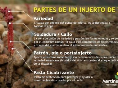 Injerto en viñedo de La Rioja 05