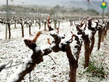Primeras nieves en el viñedo riojano del 2020