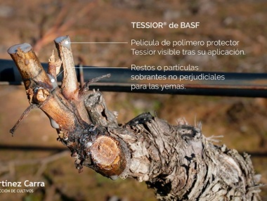 Tessior en el viñedo