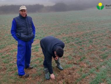 Investigamos y evaluamos el estado del cereal y malas hierbas