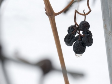 Detalle uvas