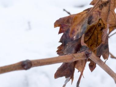 Detalle racimo y nieve
