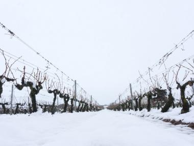 Viñedo de Rioja alta