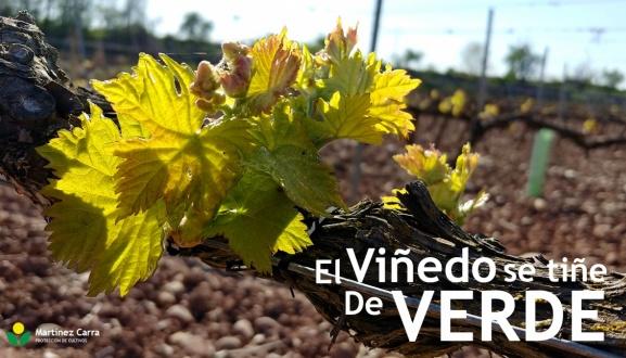 La brotación del viñedo Riojano tiñe de verde los campos
