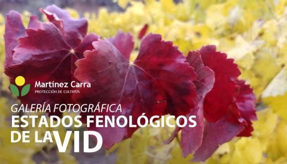 Estados fenológicos del viñedo - Galería de fotos