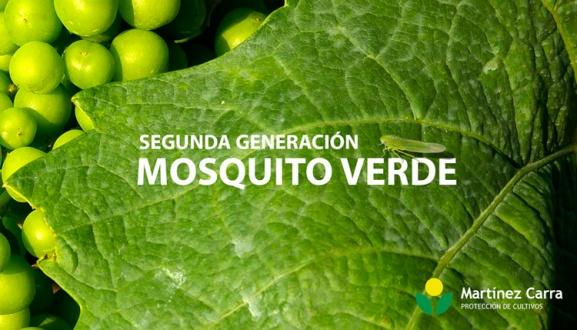 Segunda generación de mosquito verde en viñedo. Cómo combatirlo.