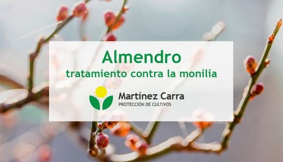 Tratamientos en almendro contra la Monilia debido a la alta húmedad
