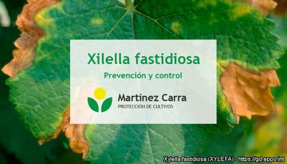 Xylella fastidiosa. Prevención y control de esta enfermedad