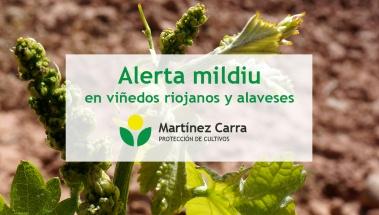 Alertas por mildiu en La Rioja y Rioja Alavesa