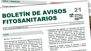Boletín 21 de avisos fitosanitarios de La Rioja | 2019