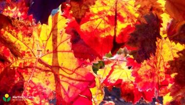 Colores del otoño en La Rioja. El viñedo en Noviembre