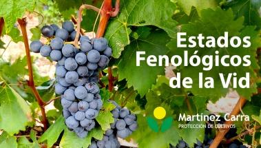 Estados fenológicos de la vid en los viñedos riojanos