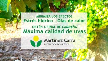 Llega a vendimias con la máxima calidad de uva