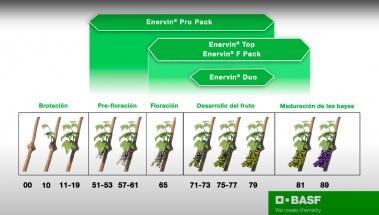 Familia Enervin, la solución para todas las situaciones durante todo el ciclo vegetativo del viñedo