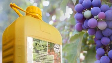 Enervin, la nueva familia de BASF para combatir el milidu en tus viñedos