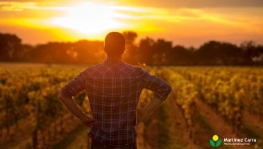 Viticultor, finalizan las vendimias 2020 con un claro protagonista. TÚ.