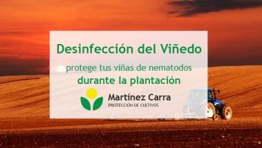 Desinfección del viñedo para evitar los nematodos