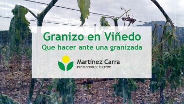 Granizo en el viñedo en época de primavera. Tratamientos y cuidados