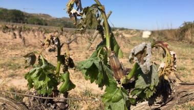 Acuerdo para aumentar el rendimiento en Rioja debido a las pasadas heladas