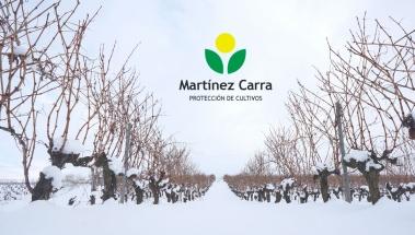 El temporal Filomena, nieve muy beneficiosa para el viñedo riojano