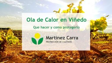 Cómo proteger el viñedo del golpe de calor