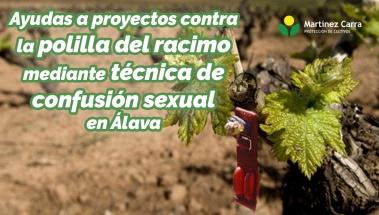 Ayudas para proyectos contra la polilla del racimo mediante técnica de confusión sexual en Álava