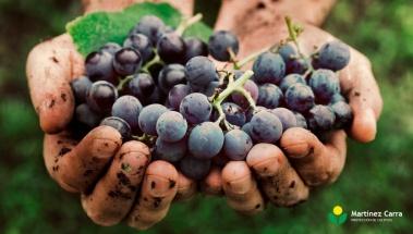 Vendimia 2019 prácticamente generalizada en toda La Rioja