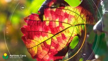 Preservación del viñedo y calidad del vino. Viñas del Futuro.