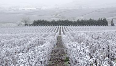 Como proteger tus cultivos contra las heladas