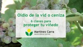 Oidio de la vid o ceniza. 6 claves para proteger tu viñedo