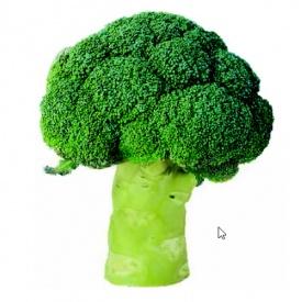 Semillas Brócoli PATHERNON F1