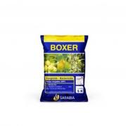 Boxer de Sarabia