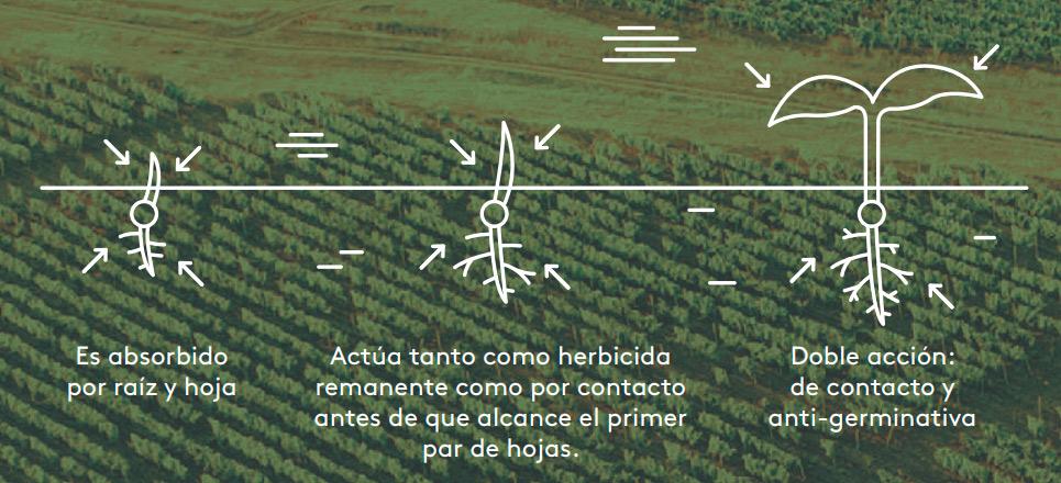 Evita las malas hierbas con Tavas de Adama